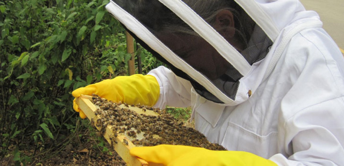 Students Get Learning Buzz With Beekeeping Course